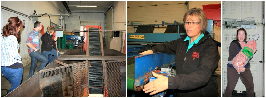 Beck Farms Collage 1