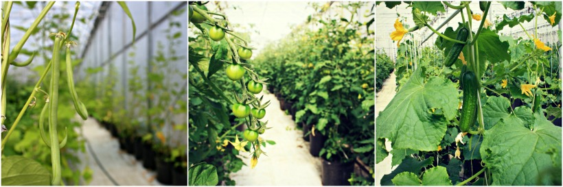 Hillside Greenhouse Collage