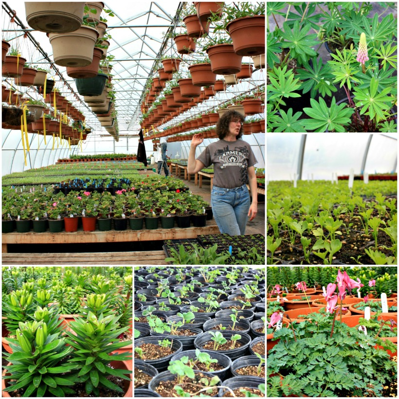 Jungle Farms Collage 1