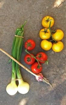 tomato blog 7